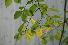 El otoño vino, la vuelta de las hojas amarilla Imágenes de archivo libres de regalías