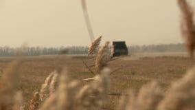 El oto?o combina en el campo que cosecha el trigo almacen de video