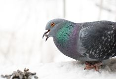 El pájaro Fotografía de archivo