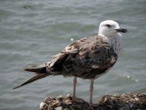 El pájaro Foto de archivo libre de regalías