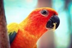 el pájaro Fotos de archivo