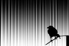 el pájaro Imágenes de archivo libres de regalías
