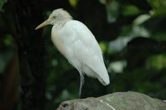 el pájaro Imagen de archivo libre de regalías