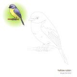 El pájaro amarillo del petirrojo aprende dibujar vector ilustración del vector