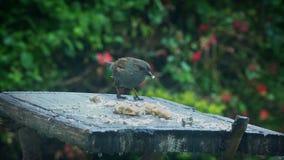 El pájaro aterriza en la tabla y come el pan