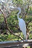 El pájaro blanco Imagenes de archivo