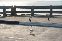 El pájaro camina en la tierra Imagen de archivo
