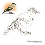 El pájaro cejudo rojo del pardalote aprende dibujar vector libre illustration