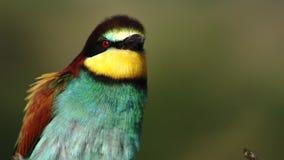 El pájaro colorido hermoso habla lengua del pájaro metrajes