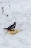 El pájaro come el pan Imagen de archivo