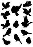 El pájaro contornea la colección Imágenes de archivo libres de regalías