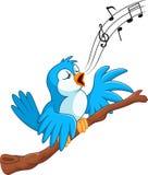 El pájaro de la historieta canta en la rama Fotografía de archivo libre de regalías