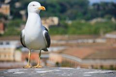 El pájaro de la itinerancia foto de archivo libre de regalías