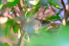 El pájaro de la madre toma a cuidado sus huevos en la jerarquía Imagen de archivo libre de regalías