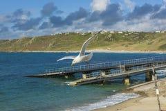 El pájaro de mar que vuela encima sennen el rompeolas de la ensenada Imagen de archivo libre de regalías