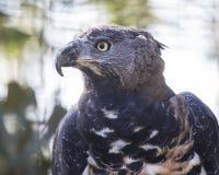 El pájaro de ruega Fotografía de archivo libre de regalías
