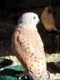 El pájaro de ruega Imagenes de archivo