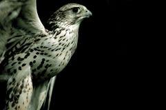 El pájaro de ruega Fotos de archivo