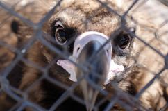 El pájaro del cierre de la presa para arriba en un parque zoológico mira la cámara Imagen de archivo libre de regalías