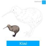 El pájaro del kiwi aprende dibujar vector Imagen de archivo libre de regalías