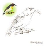 El pájaro del taveuni de Myzomela aprende dibujar vector stock de ilustración