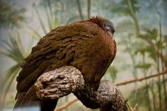 El pájaro el dormir Imagenes de archivo
