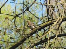 El pájaro en el árbol Imagen de archivo libre de regalías