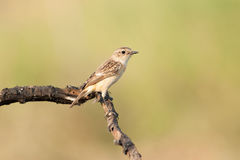 El pájaro en el palillo Foto de archivo libre de regalías