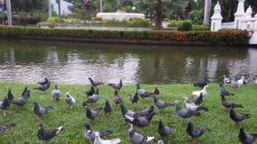 El pájaro en jardín del buak-haad Foto de archivo