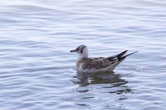 El pájaro en la orilla imagen de archivo