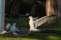El pájaro en un parque, se cierra para arriba fotografía de archivo libre de regalías