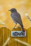 El pájaro encaramado en agosto adornó la cerca Imagen de archivo libre de regalías