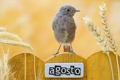 El pájaro encaramado en agosto adornó la cerca Imagen de archivo