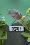 El pájaro encaramado en un abril adornó la cerca Fotos de archivo