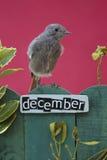 El pájaro encaramado en un diciembre adornó la cerca Imagen de archivo