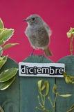 El pájaro encaramado en un diciembre adornó la cerca Fotos de archivo
