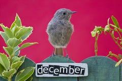 El pájaro encaramado en un diciembre adornó la cerca Imágenes de archivo libres de regalías