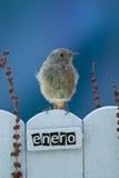 El pájaro encaramado en un enero adornó la cerca Imagenes de archivo