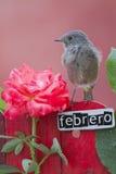El pájaro encaramado en un febrero adornó la cerca Foto de archivo