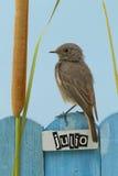 El pájaro encaramado en un julio adornó la cerca Imagen de archivo