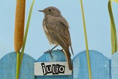 El pájaro encaramado en un julio adornó la cerca Imagenes de archivo