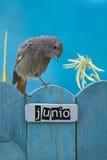 El pájaro encaramado en un junio adornó la cerca Fotos de archivo libres de regalías