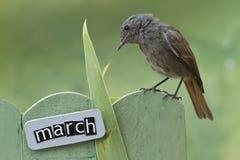 El pájaro encaramado en un marzo adornó la cerca Imagen de archivo