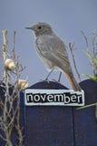 El pájaro encaramado en un noviembre adornó la cerca Foto de archivo libre de regalías