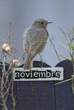 El pájaro encaramado en un noviembre adornó la cerca Foto de archivo