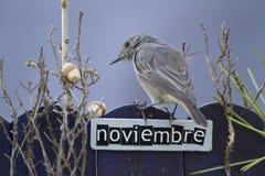 El pájaro encaramado en un noviembre adornó la cerca Fotos de archivo libres de regalías