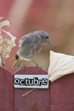 El pájaro encaramado en un octubre adornó la cerca Fotografía de archivo