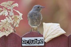 El pájaro encaramado en un octubre adornó la cerca Foto de archivo libre de regalías