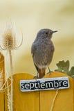 El pájaro encaramado en un septiembre adornó la cerca Fotos de archivo libres de regalías