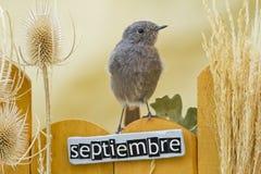 El pájaro encaramado en un septiembre adornó la cerca Imagenes de archivo